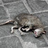 Portopalo, topi e zecche infestano il centro abitato ed è allarme