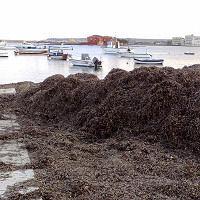 Marzamemi - Le alghe ostruiscono il porticciolo, l'acqua del pantano non defluisce e tracima sulle strade