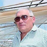 Pisana, il «professore» del ciliegino