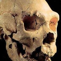 Teschio fossile trovato in una caverna «E' un reperto straordinario»