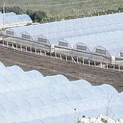 Approda nella sede dell'Ars la crisi del settore agrumicolo