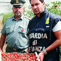 Pomodori tunisini venduti per siciliani: tre denunce