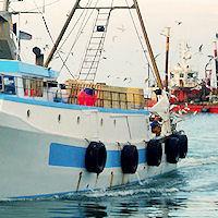 Il governo pronto a tagliare le agevolazioni per la pesca «E il carburante è alle stelle»