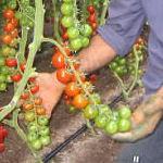 Agricoltura, rimpinguata la dotazione finanziaria