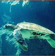Salvate due tartarughe caretta caretta