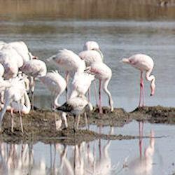 Riserva naturale Pantani della Sicilia - La Lipu chiede il riavvio dell'iter istitutivo.
