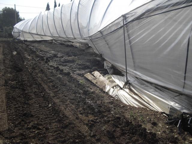Nubifragio devastante. Danni ingenti, comparto agricolo in ginocchio.