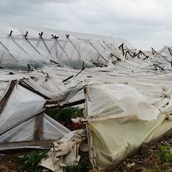 Disastro per l'agricoltura del sud est, danni ingenti in molte aziende