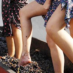 Terra Mitica riaccende a Pachino i fari sulla Festa della pigiatura