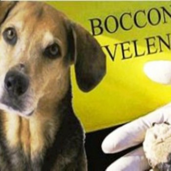Portopalo - Rinvenuti due cani avvelenati